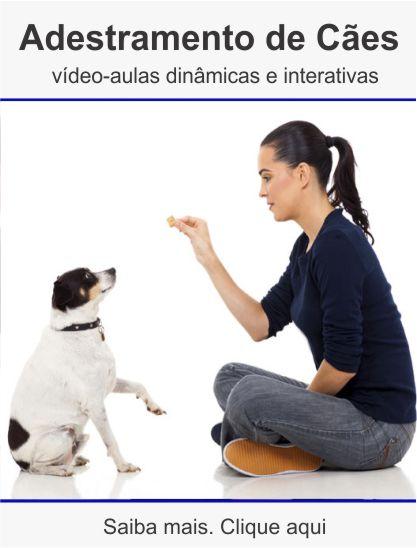 Curso adestramento de cães