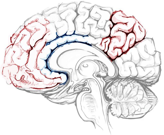 O cérebro em hipnose