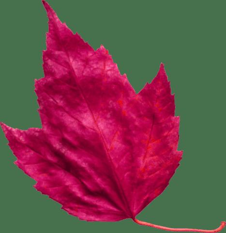red-leaf-3