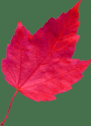 red-leaf-4